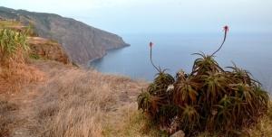 vev-Madeira-DSC9532